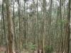 Las eukaliptusowy w okolicach Cudillero