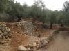 Gaje oliwne Majorki