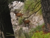 Kozice w górach Serra de Tramuntana