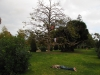 Hipsterskie drzewko w Parc de la Ciutadella