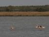 Słone bagna to raj dla flamingów