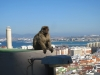 Magoty to symbol Gibraltaru