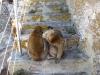 Małpy zagrodziły nam drogę