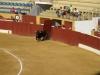 Pierwszy byk wybiega na arenę