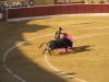Torreadorzy drażnią byka