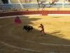 Banderilleros atakują byka krótkimi włóczniami