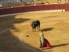 Matador szykuje się do decydującego pchnięcia