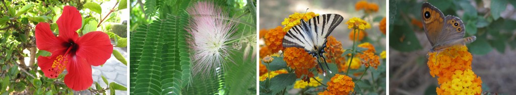 Flora i fauna Kosu