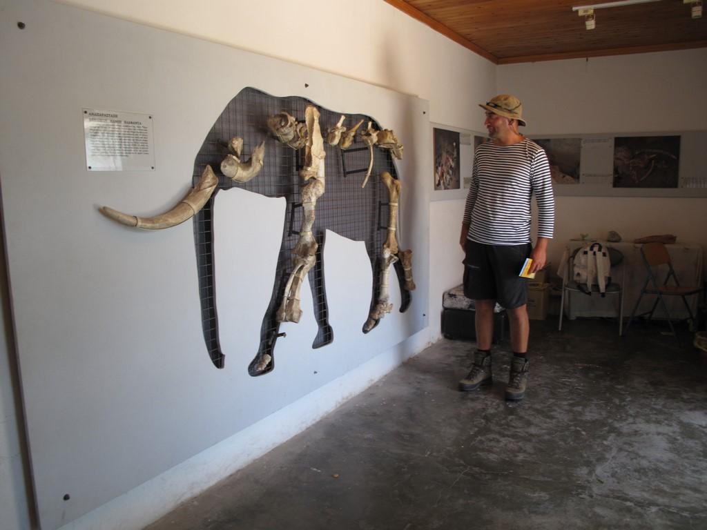 Karłowaty słoń z Tilos