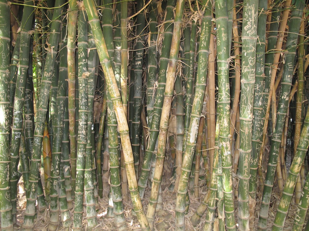 Bambusowy zagajnik w parku w Retimno
