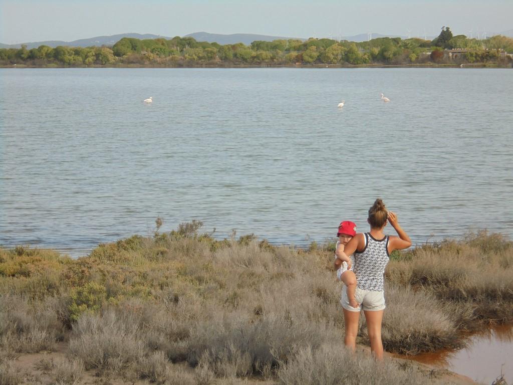 Karolina tropi flamingi w Sant Antioco