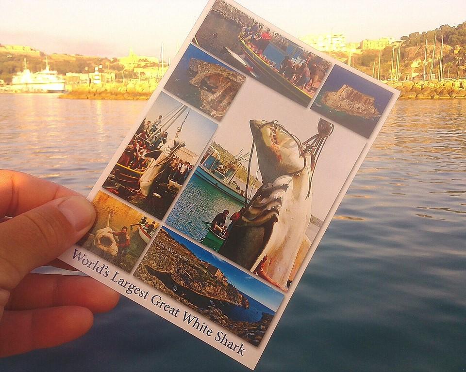 Rekordowy rekin na Gozo
