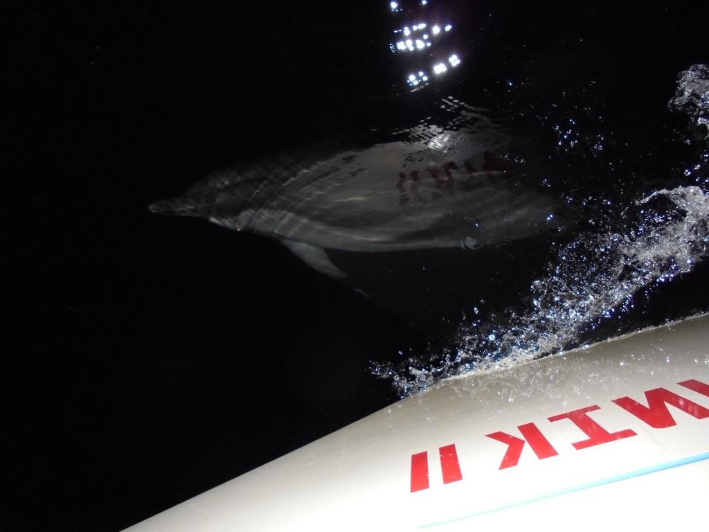 Sputnikowy delfin