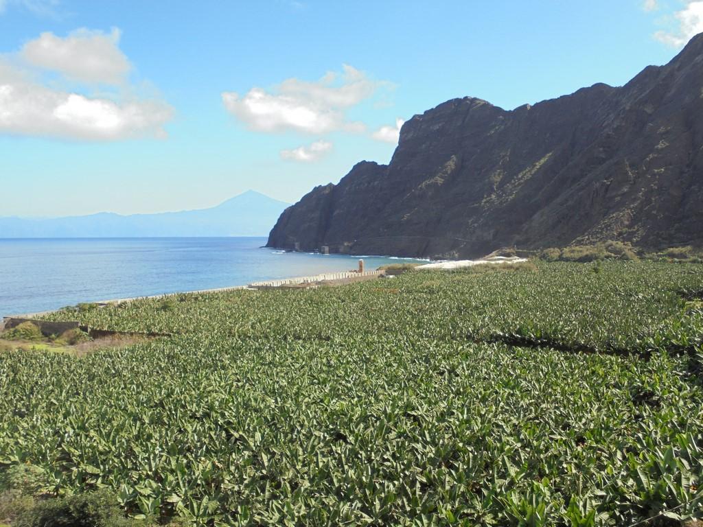 Plantacje bannów w Santa Catalina
