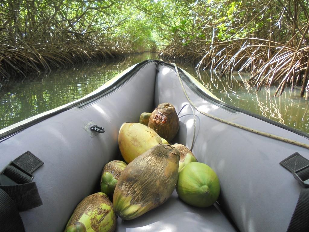 Owocna wycieczka w mangrowiec