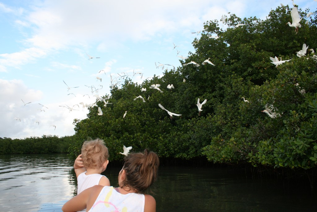 Czaple w mangrowcu
