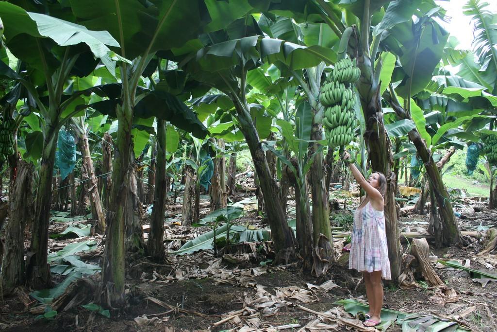 W muzeum bananów 8