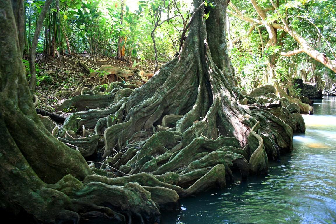 Mangrowce na Indian River