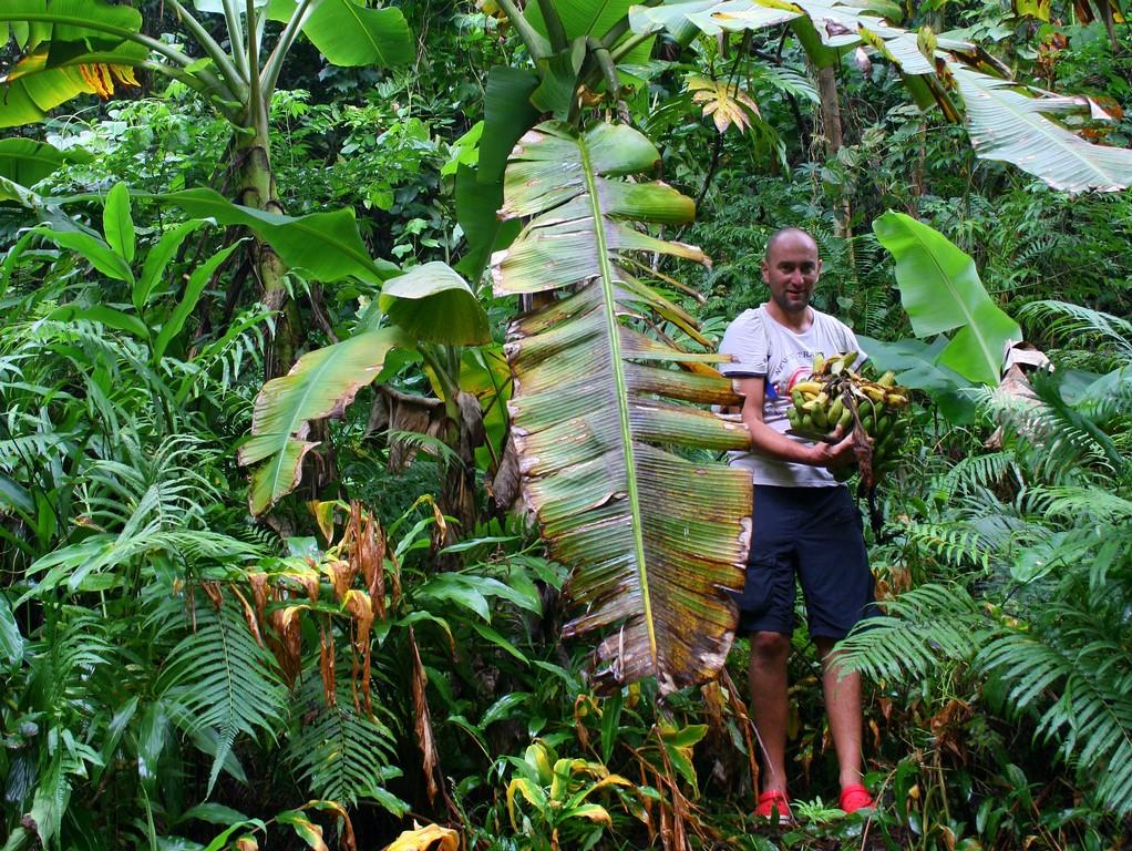 Dzikie banany na Fatu Hiva