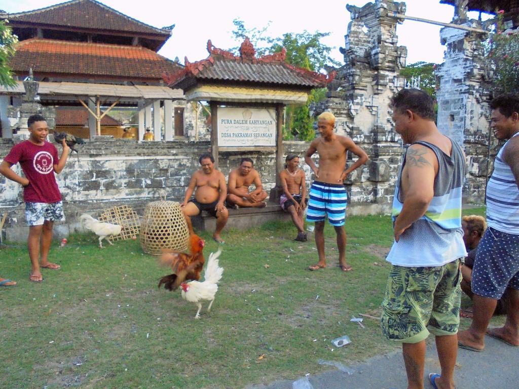 Walki kogutów - Serangan na Bali
