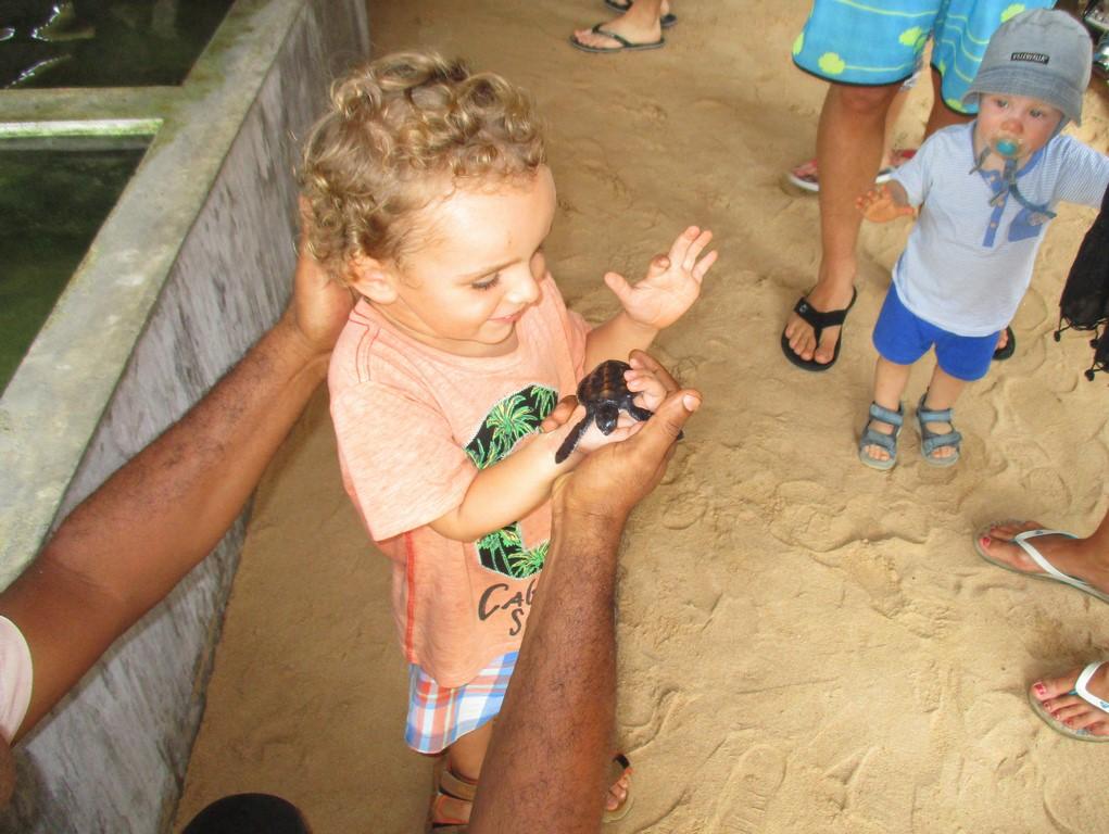 Bruno i mały żółwik