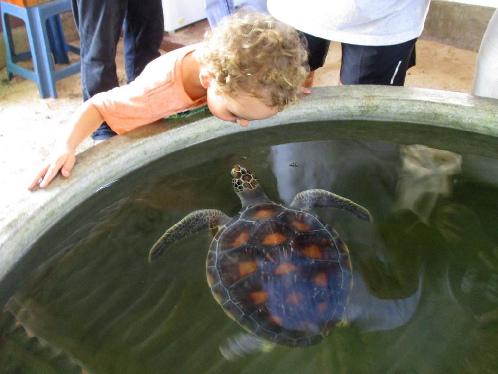 Bruno w wylęgarni żółwi