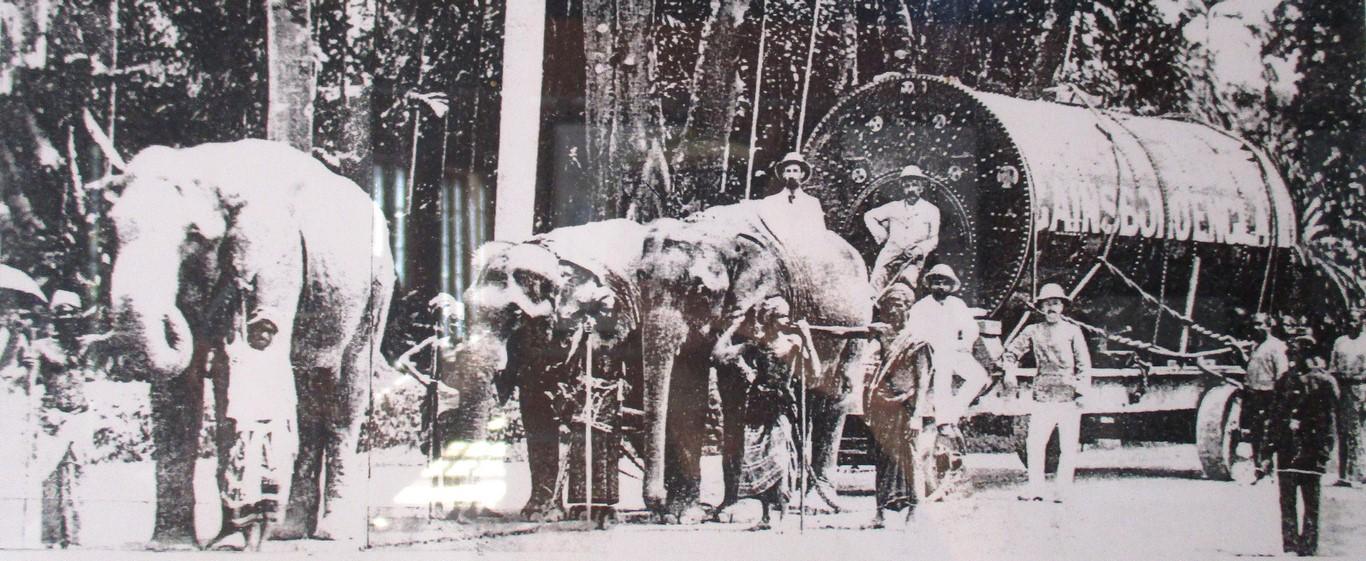 Początki przemysłu herbacianego na Ceylonie