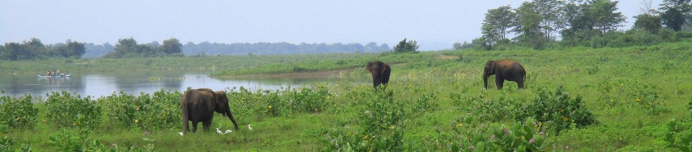 Słonie na safari w Udawalawe National Park