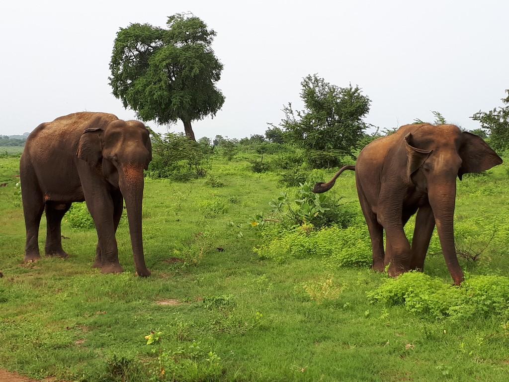 Słonie w Udawalawe National Park